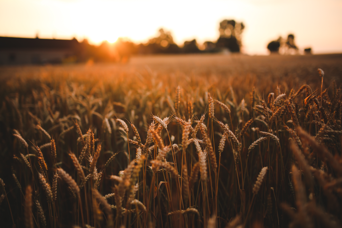 food-sunset-love-field_little