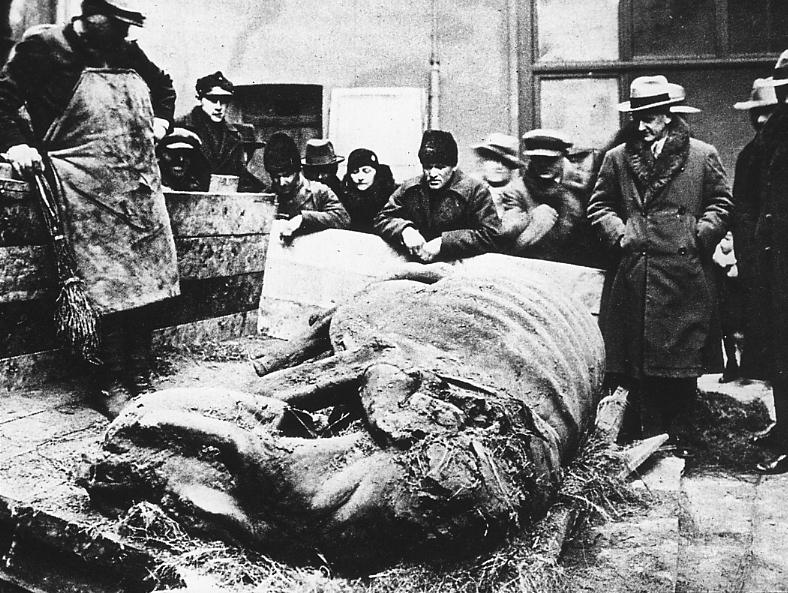 Туша зі шкірою, яку було знайдено в асфальтових покладах на нафтовому родовищі у Старуні, Україна, 1929 рік