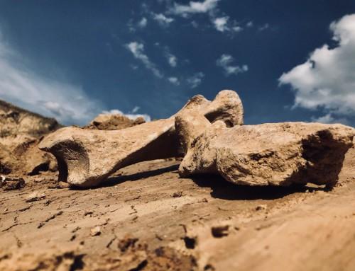 В Гопчиці знайшли рештки шерстистого носорога (фото)